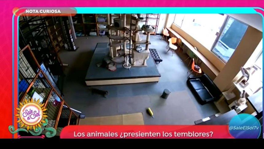 Los animales ¿presienten los temblores?