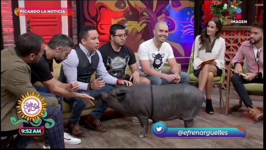 ¡La Chata Pig ayuda a conseguir una prótesis!