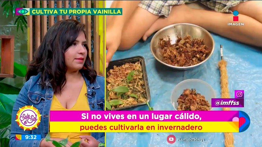 ¡Haz tu propio cultivo de vainilla en casa!